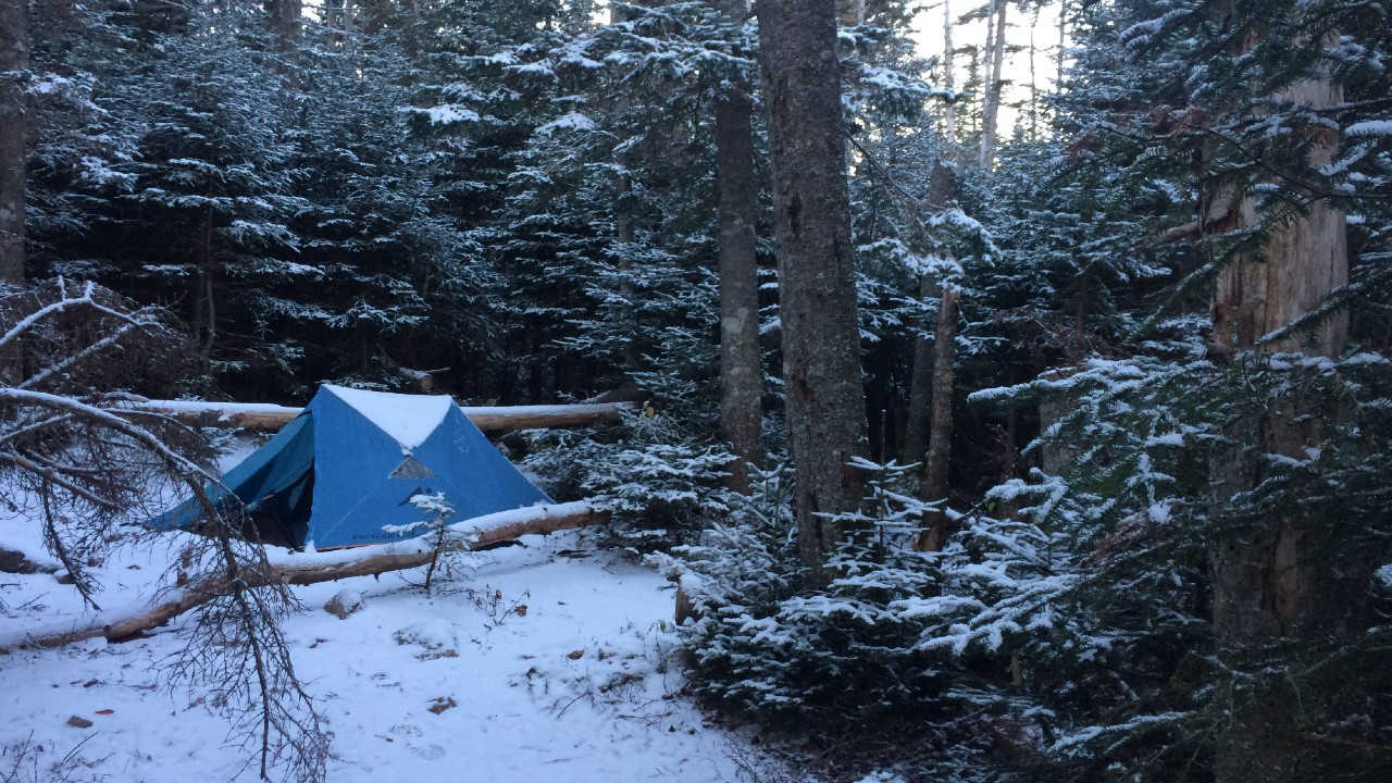 Tent set up in the snow, guarded by evergreens at dusk, for winter camping